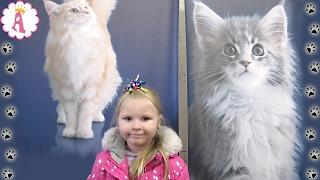 VLOG Алиса выставка кошек в Николаеве октябрь 2016 года Cat Show Ukraine милые кошки и котята kitten