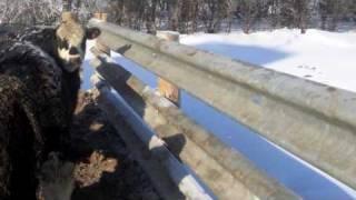 Used Guardrail | Livestock Fencing