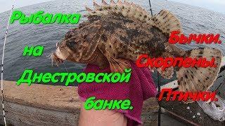 Рыбалка на Днестровской Банке. Морская рыбалка. Рыбалка на бычка. Скорпена. Ёрш. Кнут. Улов. Мидия.