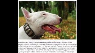 ТОП 10 самые злые собаки в мире