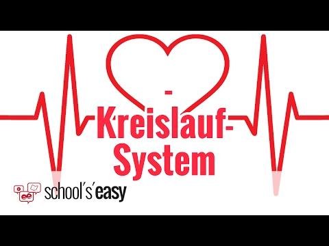 Das Herz-Kreislauf-System Des Menschen