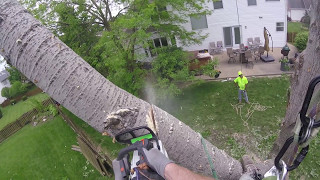 First Day At Mathias (Cottonwood Removal)