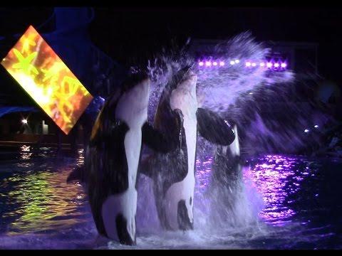 Shamu's Celebration: Light Up the Night at SeaWorld San Diego 9-3-16