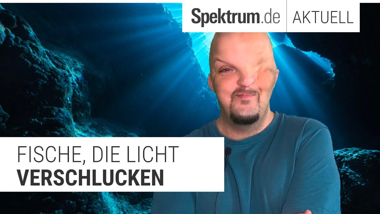 Fische, die Licht verschlucken