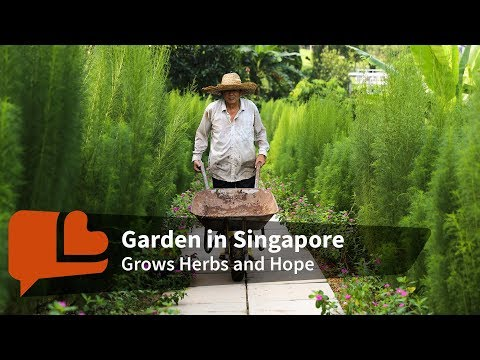 The One Way This Singapore Gardener Knows to Help