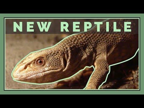 I Got My Dream Reptile   New Pet Lizard!