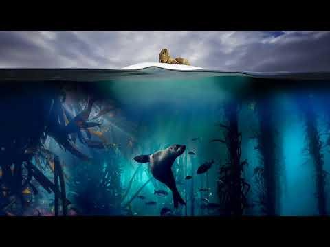 The Blue Planet (Blue Planet 2 Soundtrack)