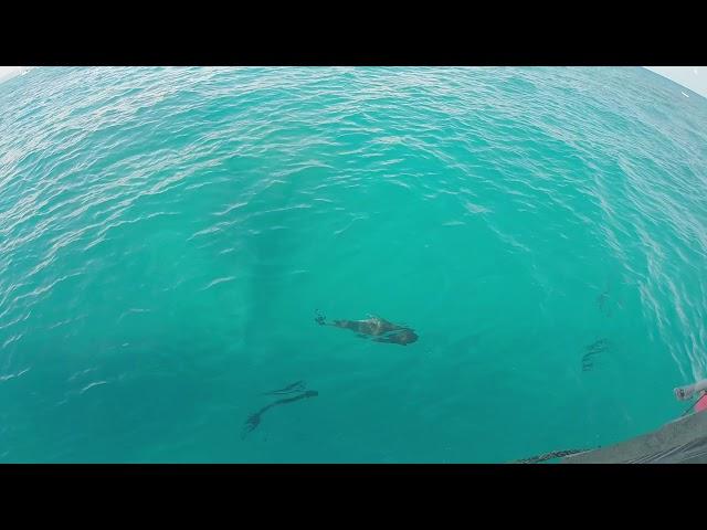 Над водата