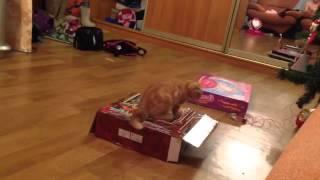 Отдайте подарок коту!!!
