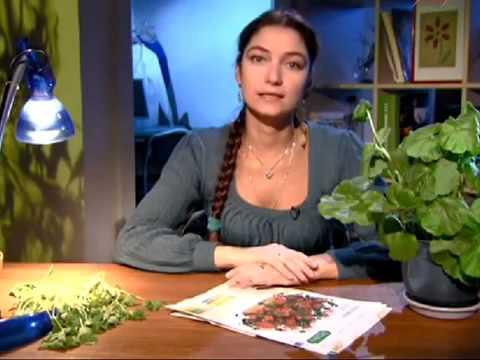 Лекарственное растение алоэ древовидное » Популярно о здоровье