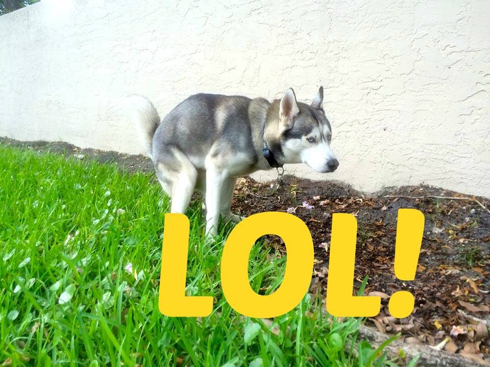 Gohan's Poop Runs! (LOL)