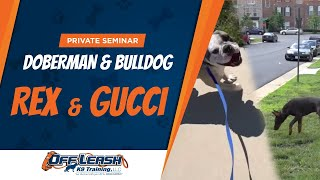 Private Seminar: Doberman And Bulldog!  2 Dogs In 5 Days! Challenge Accepted!