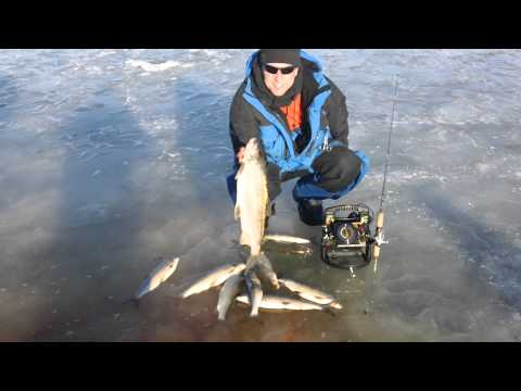 Monster Door County Whitefish,icefishgreenbay,Door County ice fishing,ice fishing Green Bay,