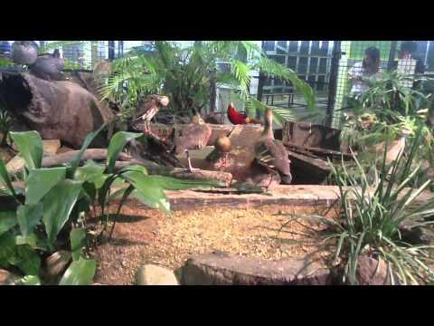pheasant and waterfowl society display