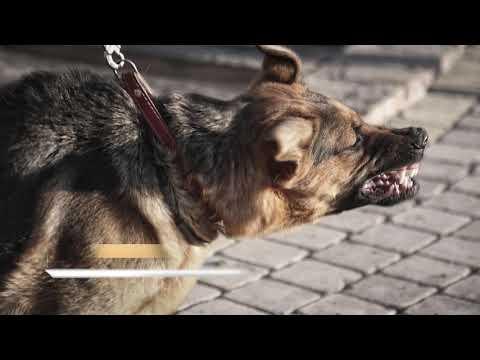 New Jersey Dog Bite Attorneys
