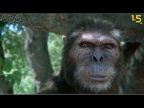 【人類誕生CG】440万年前の人類は愛妻家でイクメンだった!?【NHKスペシャル×NHK1.5ch】