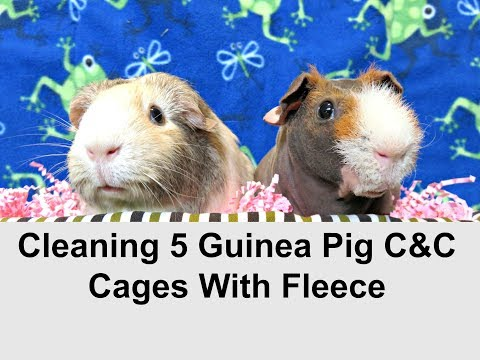 October Cage Clean: 5 C&C Cages With Fleece (10 Guinea Pigs)