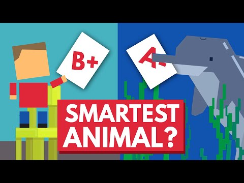 Which Animal Is The Smartest?