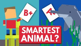 Which Animal Is The Smartest? by : Life Noggin