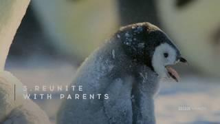 Home Alone in Antarctica | Dynasties | Saturdays at 9pm | BBC America