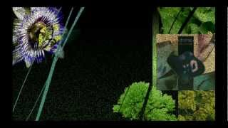 SPK - Palms Crossed in Sorrow / Alocasia Metallica 1987