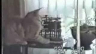 Funny Cats are Lustige Katzen