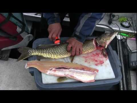 No Bones About It--How to Fillet a Pike