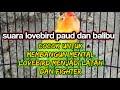 Masteran Pancingan Suara Lovebird Paud Balibu Belajar Ngekek Cocok Untuk Membangun Mental Lovebird  Mp3 - Mp4 Download