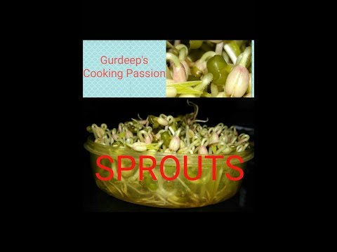HOW TO SPROUT LENTILS | DAL SPROUTS | VERY ESY METHOD OF SPROUTS