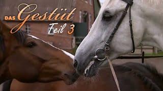 Das Gestüt - Teil 3 - Hengstalltag Dokumentation über Pferde, Tierdoku, deutsch, Schulfilm