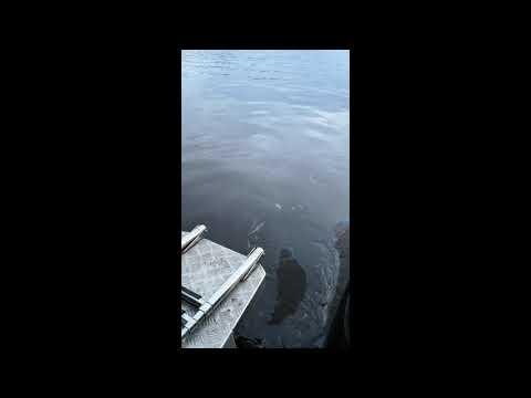 Рыбинск !!! Как загрязняют наши реки .
