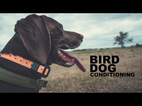 Upland Hunting Series | Bird Dog Conditioning Episode 1