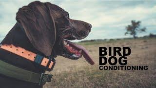 Upland Hunting Series   Bird Dog Conditioning Episode 1