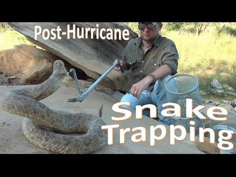 Snake Trapping -Post-Hurricane Urban-
