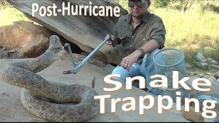 Snake Trapping -Post-Hurricane Urban-
