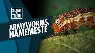Stand for Truth: Armyworms, namemeste sa Pangasinan!