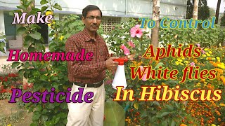 How to make Homemade Pesticide to Control Aphids and White flies.