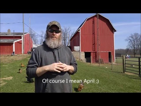 2016 Spring Projects - Pastured Pigs, Horse Area Prep, Boy Goat Area, Meat Chickens