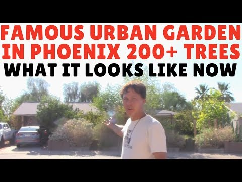 Mace's Backyard Desert Garden Tour - Urban Food Forest - What It Looks Like Now