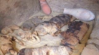 В Египте впервые нашли мумии скарабеев