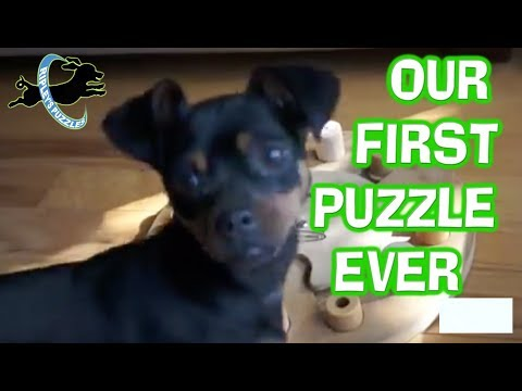 Our First Dog Game Ever | Ripley is a Fast and Smart Puzzle Solver
