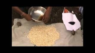 Azatobactor se Makka Beej Upchar ka Tarika