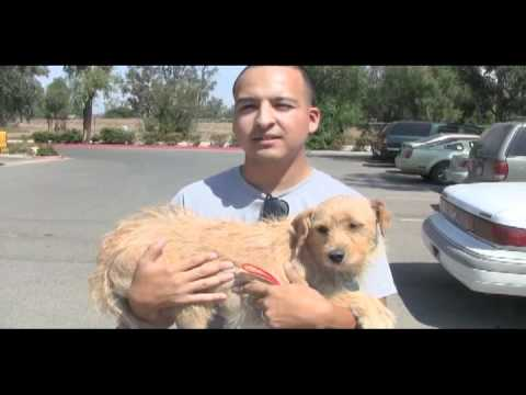 Channel  Dog Rescuers Adopt