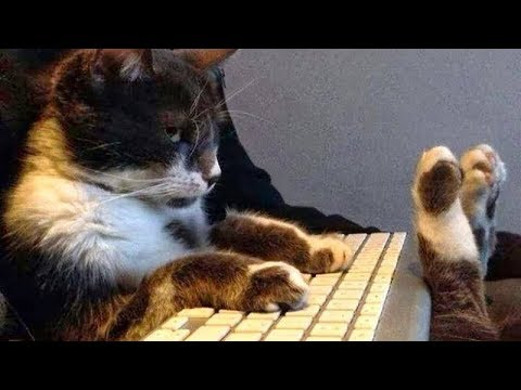 THESE CATS will MAKE YOU burst into LAUGHTER! - Funny CAT compilation