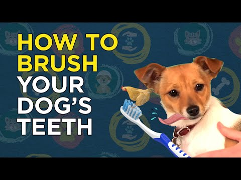 how-to-brush-your-dog's-teeth-(canine-dental)---vetvid-episode-007