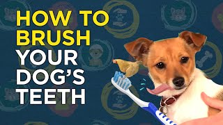 How to Brush Your Dog