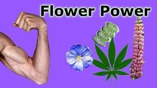 Muskelaufbau mit veganer Rohkost? Kein Problem mit diesen proteinreichen, pflanzlichen Lebensmitteln