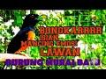 Tembakan Murai Batu Anti Php Pasti Gacor  Mp3 - Mp4 Download