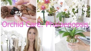 Orchid Care For Phalaenopsis: Watering, Repotting, Feeding, Flower Spikes