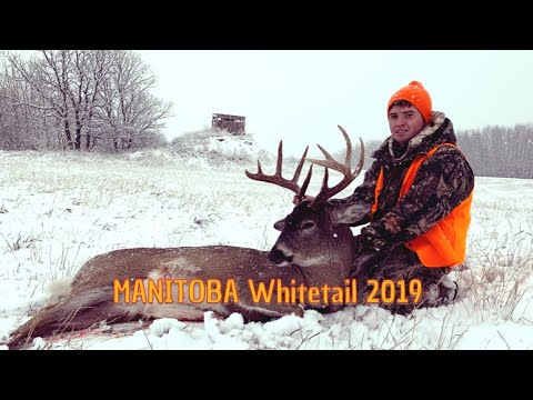 2019 MANITOBA Whitetail Hunt.